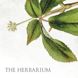In the online herbal apprenticeship, we are studying plant energetics and their actions. Many of us in the herbal community share a passion for seeking out natural homemade remedies. We are not onl...
