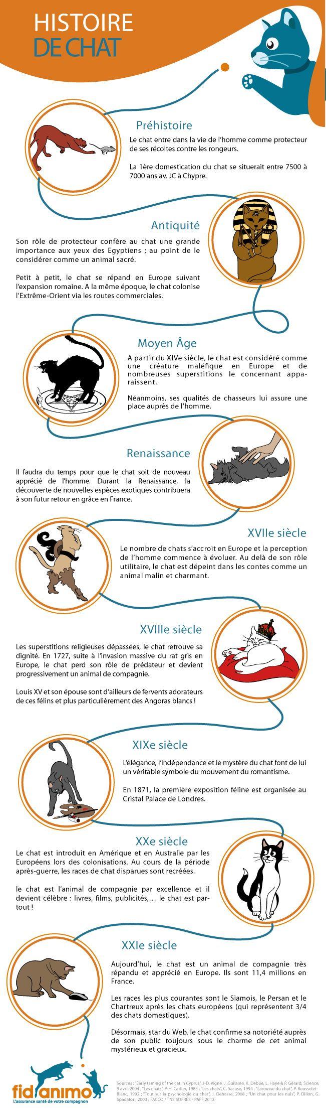 Infographie animaux : Histoire de chat.  Le chat et l'homme ont une histoire commune complexe. Vu comme un protecteur, un animal maléfique, un compagnon attachant puis une star du web, l'image du chat a beaucoup évoluée depuis la Préhistoire !