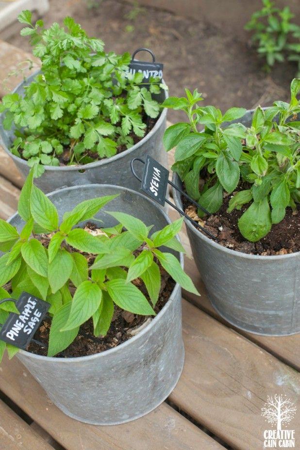 Best 25 potted herb gardens ideas on pinterest container herb garden patio herb gardens and - Herb container gardening ideas ...