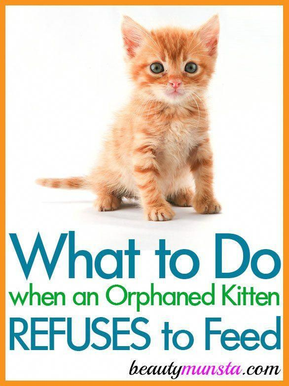 When an Orphaned Kitten Refuses to Feed Eyecreams (With