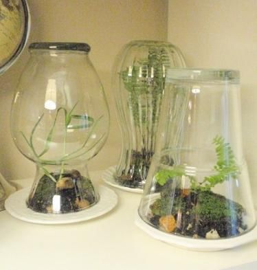 Simple DIY Home Terrarium | Shelterness- cute idea for kids