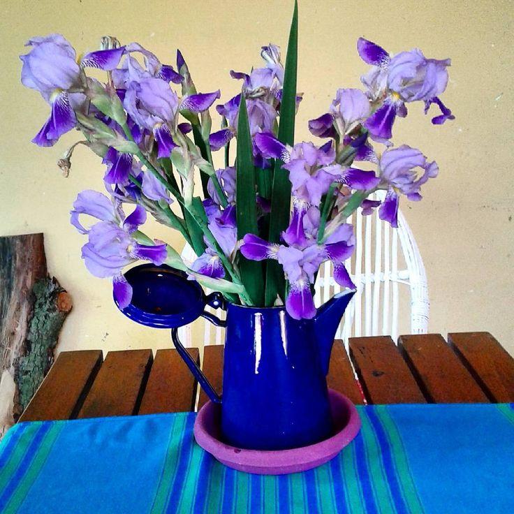 Na wsi u mojej siostrzyczki Lidki. #wieś #bukiet #irysy #mojeulubionekwiaty #dzbanek #country #bouquet #irises #vase