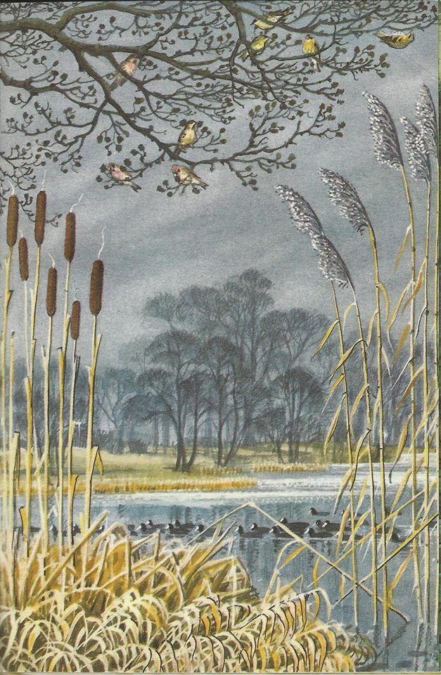 "Illustration by Charles Tunnicliffe from the Ladybird book ""What To Look For In Winter"""