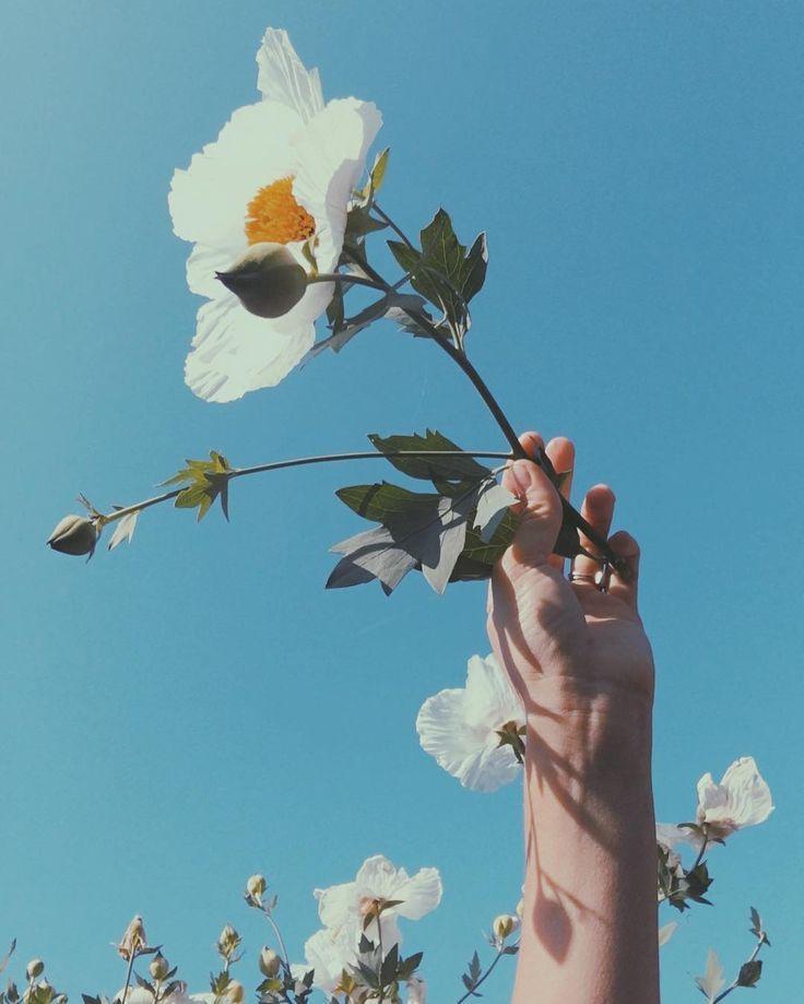 White Flowers Love Light Blue Aesthetic Blue Aesthetic Plant Aesthetic