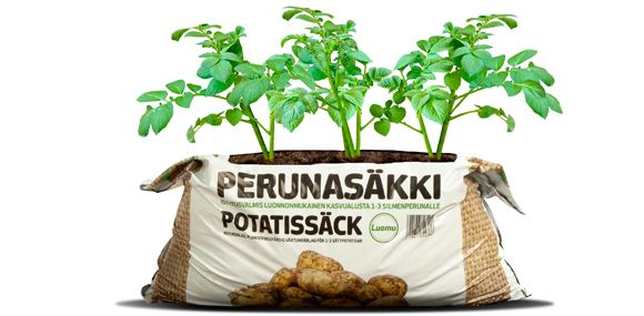 Biolan Perunasäkki on valmis kokonaisuus perunan kasvatukseen.