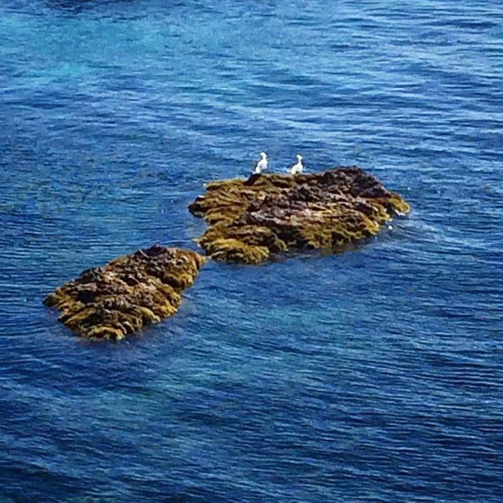 Nous on bronze en attendant le Swimrun Estérel St Raphaël le samedi 18 mars #agay #nature #bird #birds #sea #blue #france #holiday #destination #french #riviera #visitvar #visitesterel #mysaintraphael #cotedazur #cotedazurfrance #cotedazurnow http://ift.tt/2mDQd5a