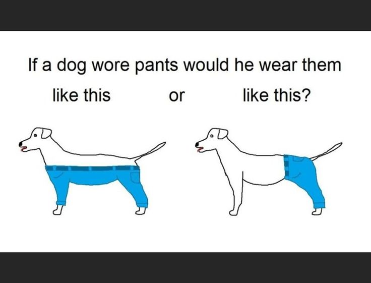 Dinner party conversation took quite a turn a couple of weeks ago when a very important topic was raised around the globe: how does a dog wear pants? Ok, w