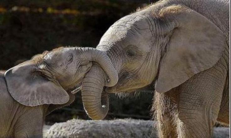 .: Elephants Baby, Tattoo Ideas, Baby Love, Kiss, Mothers Love, Baby Tattoo, Mothers Day, Baby Elephants, Funny Animal