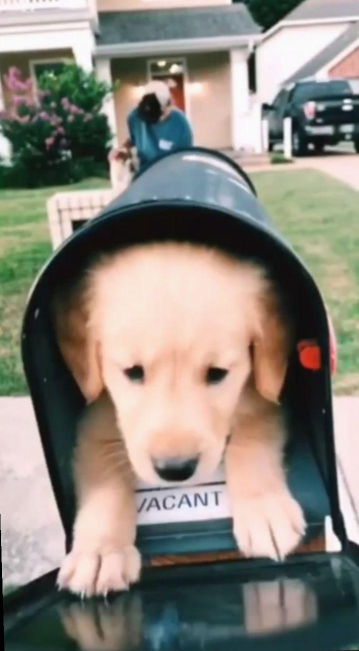 Cute Puppies Videos Aesthetic Aderitacristina Miniensaio