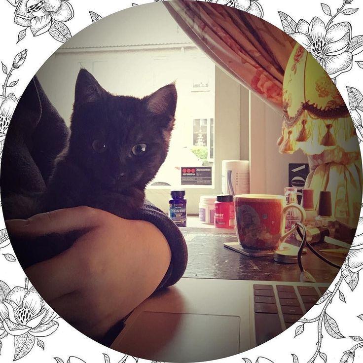 Geen straf om te werken met deze kleine hummel  | #cats #love #work #kitten #dutch #sweet #cutecats #netherlands