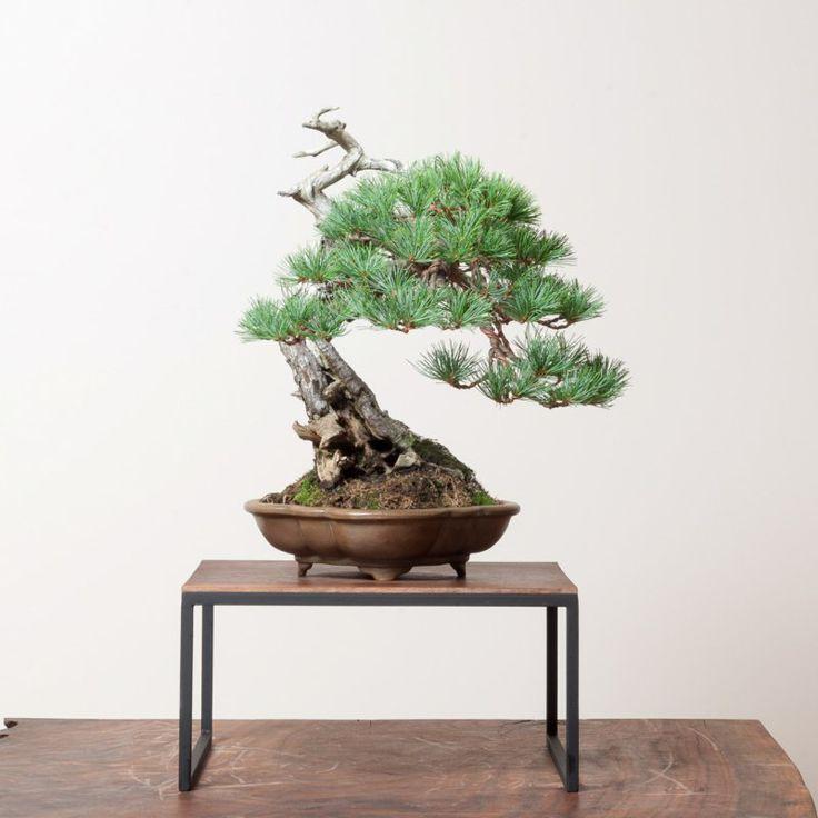 132 best images about zimmerpflanzen on pinterest hanging herbs ficus elastica and plants - Dekorative zimmerpflanzen ...