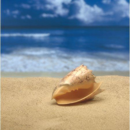 Close-Up Of Seashell On Beach With Ocean Soft Focus In Background A33D Canvas Art - Kate Turning and Tom Gibson Design Pics (15 x 15)