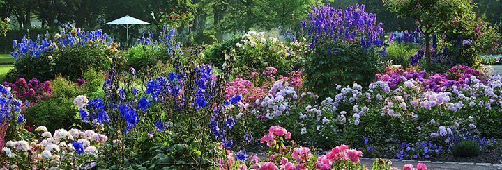 Von wegen langweilig! Rosengärten können so spannend sein! Vorausgesetzt, schon jetzt im Herbst plant man die mutigsten Kombinationen von Rosen mit Mehrjährigen in verschiedenen Farben, Formen und Höhen für nächstes Jahr. So entstehen solche bezaubernden Bilder wie diese Juni-Aufnahme im Rosengarten Zweibrücken.