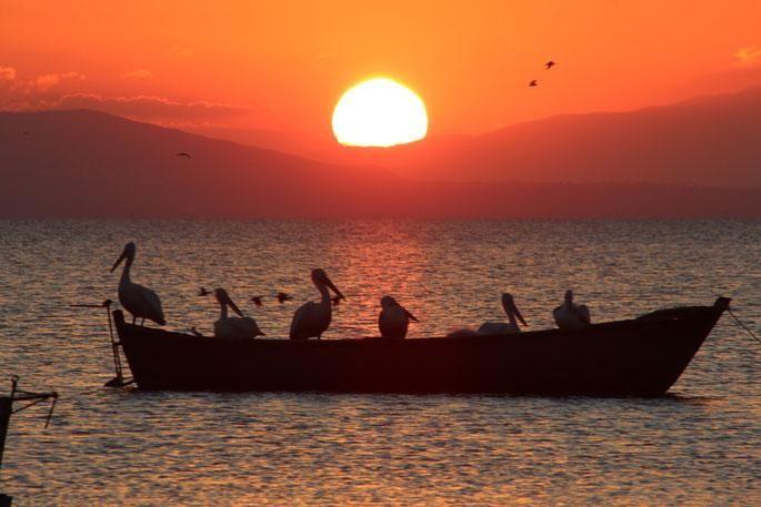 Balıkesir'in Manyas İlçesi'nde bulunan ve her yıl 250 türden 3 milyon kuşa ev sahipliği yapan Manyas Kuş Cenneti