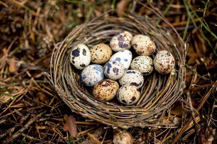 Весна, перепелиные яйца