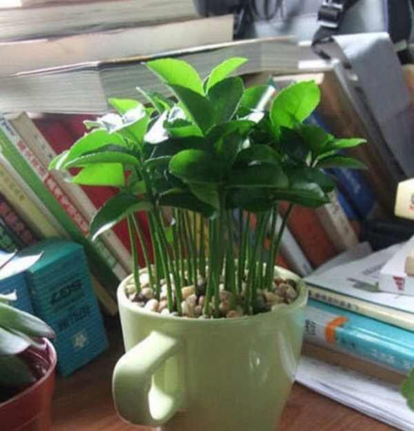 DIY- I Found An Easy Way To Pot Plants Without Spending Extra Money