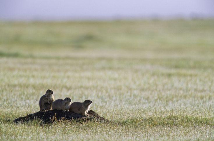 best 25 savanna biome ideas on pinterest savanna