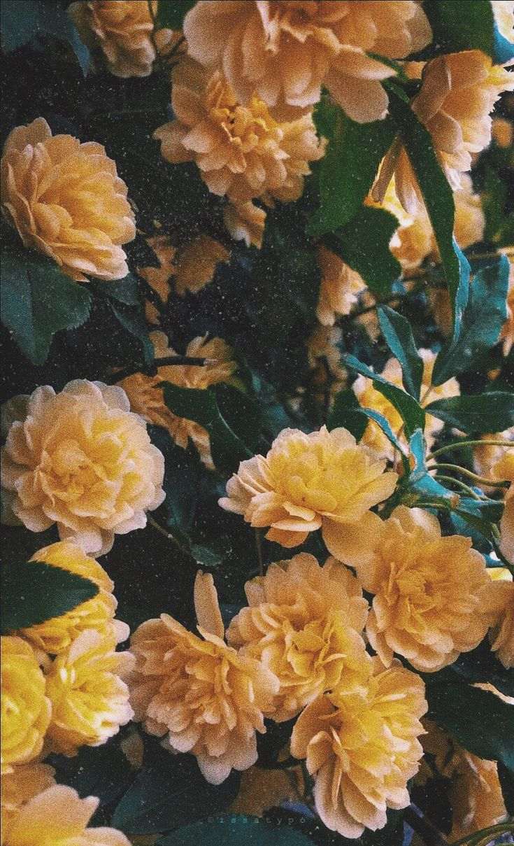 Flowers Yellow Edits Aesthetic Flowerstagram