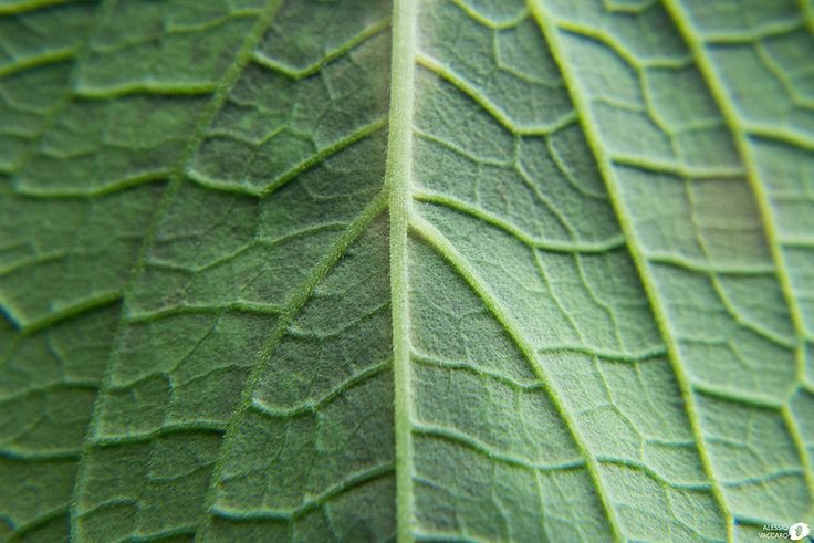 Close-Up: #2 Leaf - Video Extracted Frame