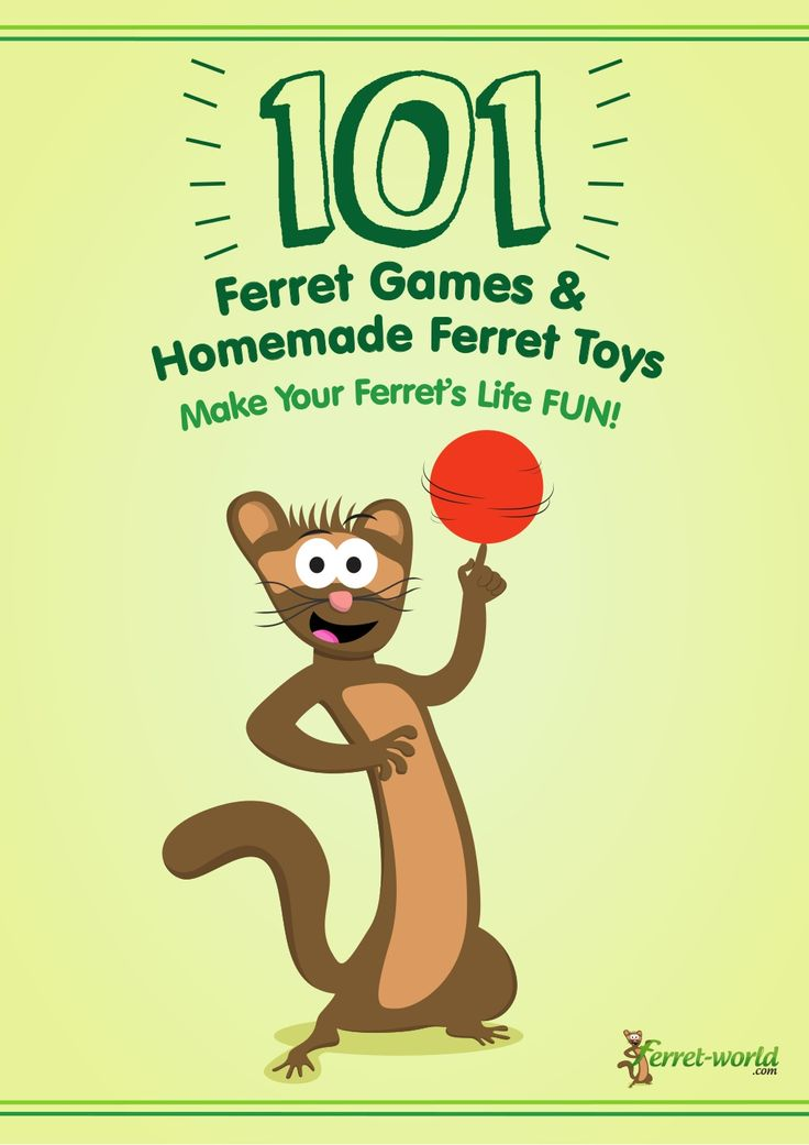 101-ferret-games-homemade-ferret-toys by Ferret-World .com via Slideshare