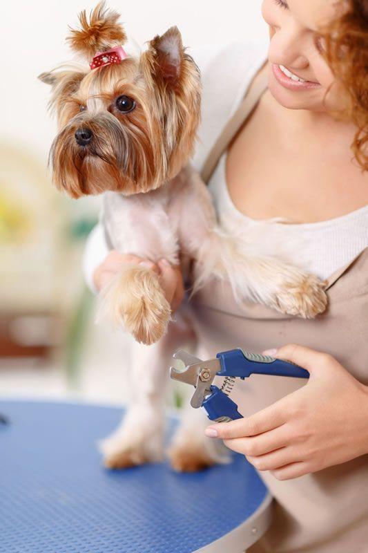 Curso de Peluquería | Estética canina Costa Rica, la Sabana, curso peluquería, tienda para mascotas