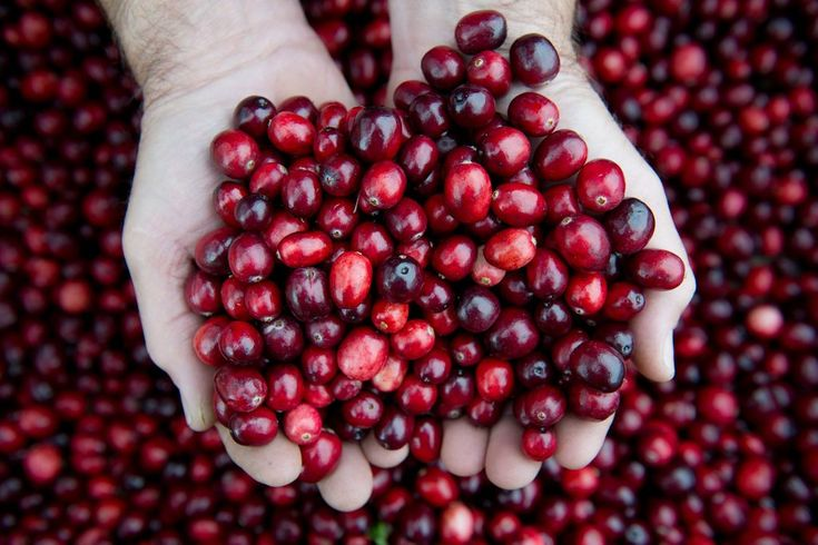 A yearlong study of female nursing home patients who took high-dose cranberry capsules showed no reduction in urinary tract infections.
