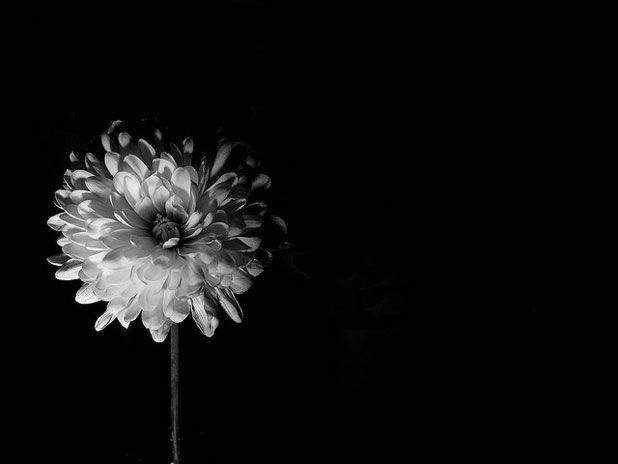 Dark & Mysterious: 20 Examples of Low-Key Photography | The Inspiration Blog