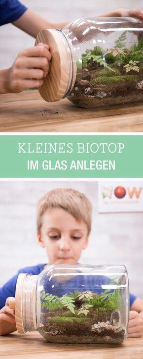DIY trifft Wissenschaft für Kinder: Biotop im Glas selbermachen, Gärtnern mit … – Claudia Gottschalk