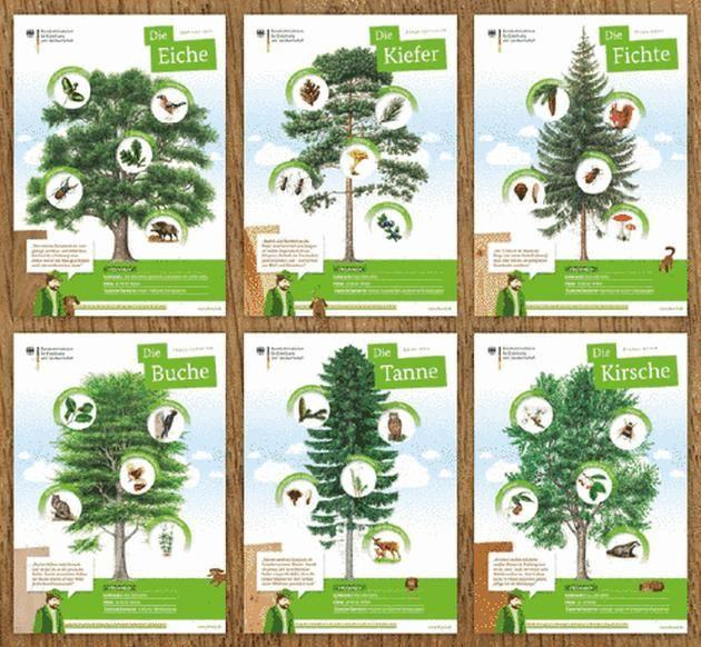 Zusammenstellung der sechs Poster zur Waldfibel