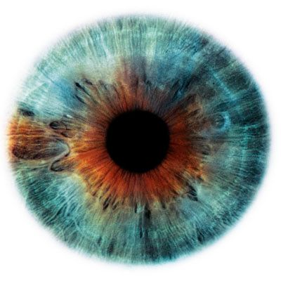 Eye | Iris | Pupil | 目 | œil | глаз | Occhio | Ojo | Color | Texture | Pattern | Macro | by Rankin (Eyescapes series)