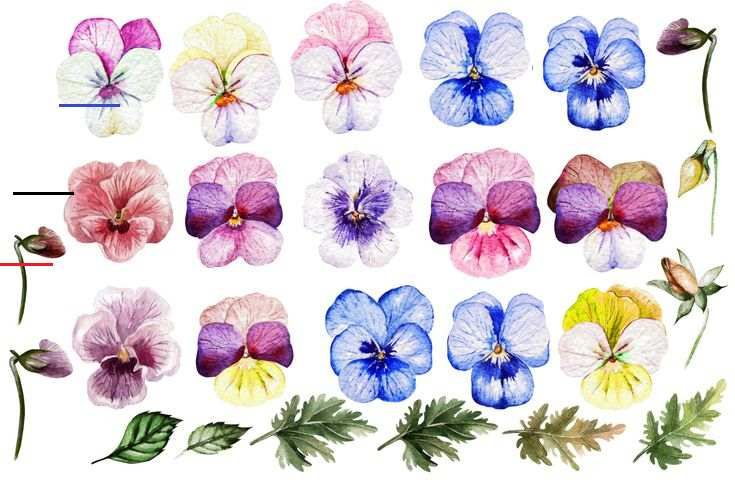 Watercolor Pansy Flowers In Design Elements On Yellow Images Creative Store Watercolor Pansy Flowers Present Your Design On T In 2020 Design Elements Pansies Creative