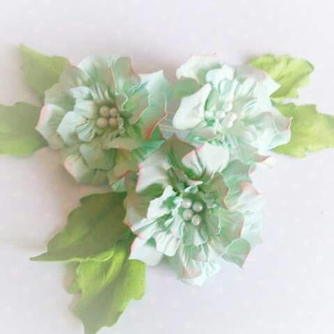 Gardenia duża