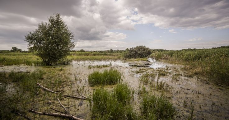 MERZSE Swamp near 17th district