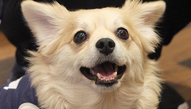 #Diara#ディアラ#馬肉#馬肉専門店#愛犬#愛猫#食事#ドッグフード#犬ごはん#手作りごはん#おやつ#犬おやつ#ローフード#Rawfood#生肉#生食#元町#横浜#中華街#元町中華街#ドライトリーツ#マルックス