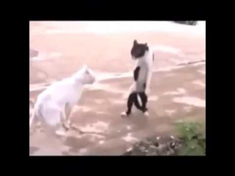 Cat – moon walking