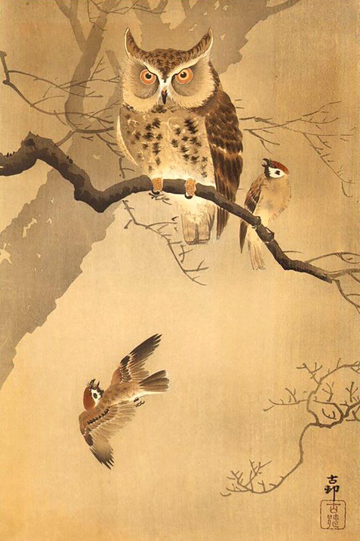 масса двух японская сова рисунок держится такая красота