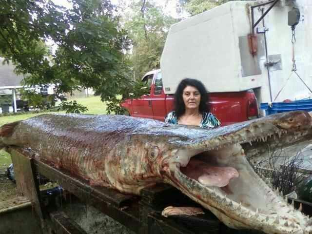 how to clean a alligator gar fish