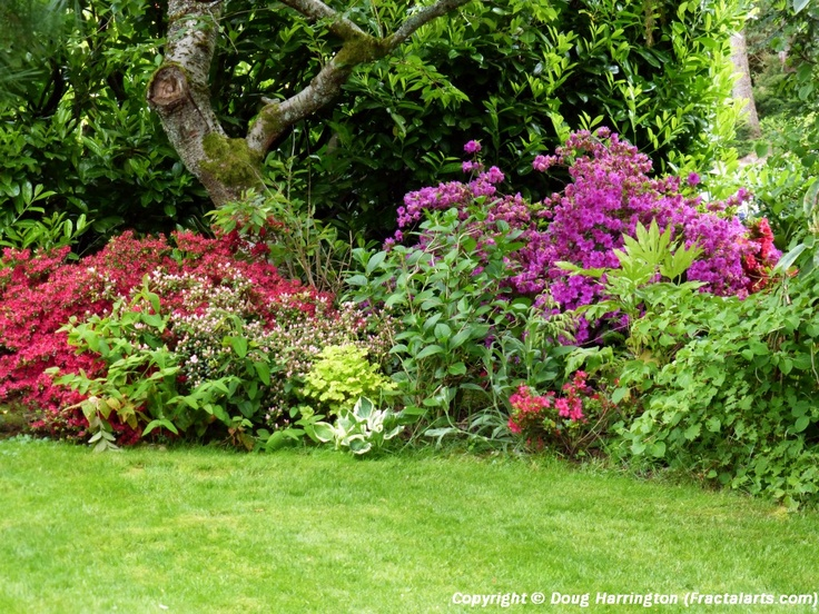 Variety Of Azaleas In A Shady Corner Of My Yard. Backyard  LandscapingLandscaping IdeasYard ...