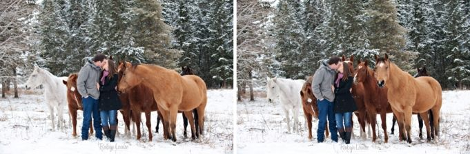 Herd of Quarter Horses in the snow. Palamino horse. Engagement Session Photography by Robyn Mumford of Robyn Louise Photography in Quesnel, BC.  Cariboo, Quesnel, Williams Lake, BC and beyond equine and wedding photographer. www.robynlouise.com #quarter #horse #bucksin #engagement #winter #snow #horses #sorrel #kiss