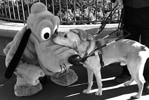 <3: Puppies, Best Friends, Heart, Sweet, Disney World, Disneyland, Service Dogs, New Friends, Animal