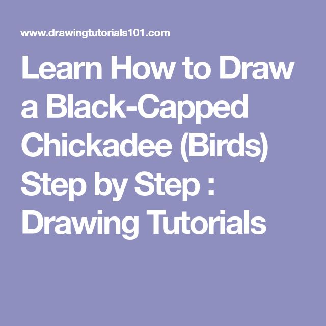 how to draw a black capped chickadee