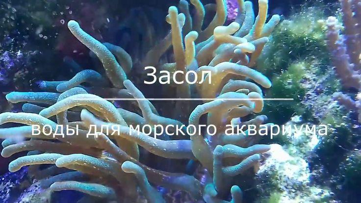 Засол воды для морского аквариума