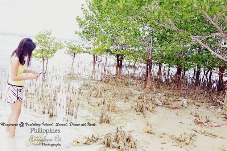 Mangroves at the Vanishing Island,Samal,  Davao del Norte, Philippines