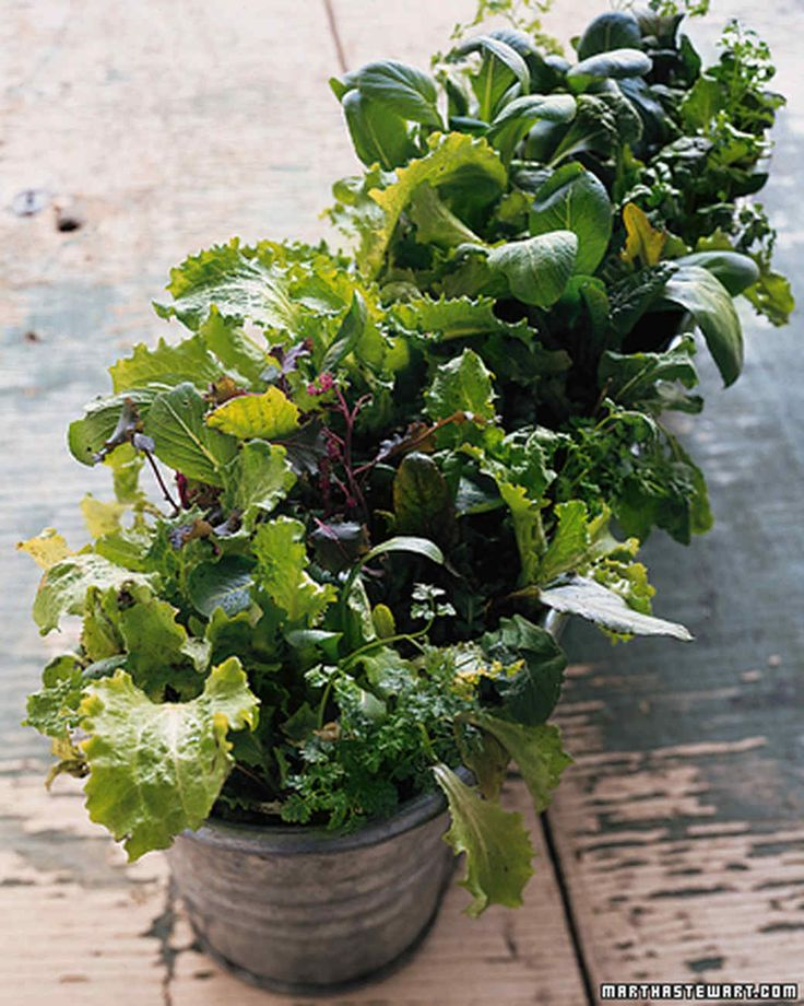 30 Best Images About Kitchen Gardening On Pinterest: 30 Best Container Gardens From Seed Images On Pinterest