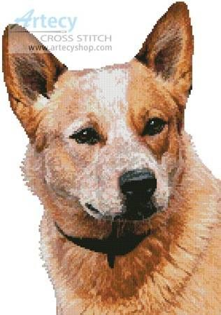 Red Heeler Cross Stitch Pattern   Animals, Cross stitch ...