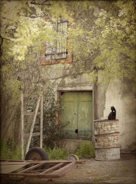 Rachael McKeena: The French Cat