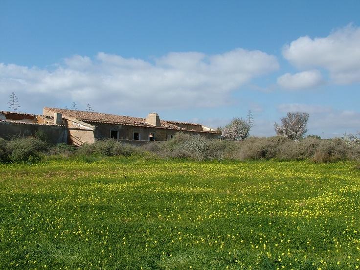 Campos sobre falésias #Portugal