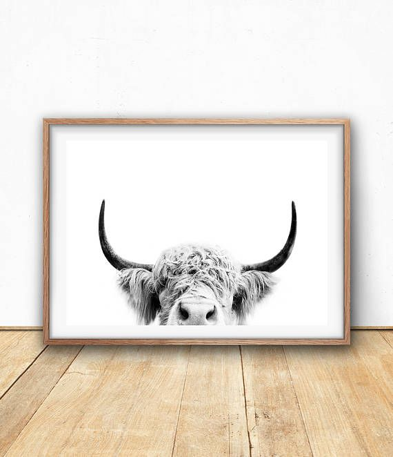 Highland Cow Print – Farm Animal Wall Art, Digital Download, Cow Poster, Cattle Photography, Animal Portrait, Black And White, Farm Nursery