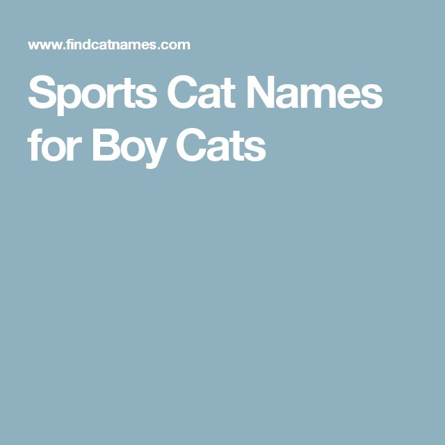 Best 25+ Cat names for boys ideas - 15.3KB