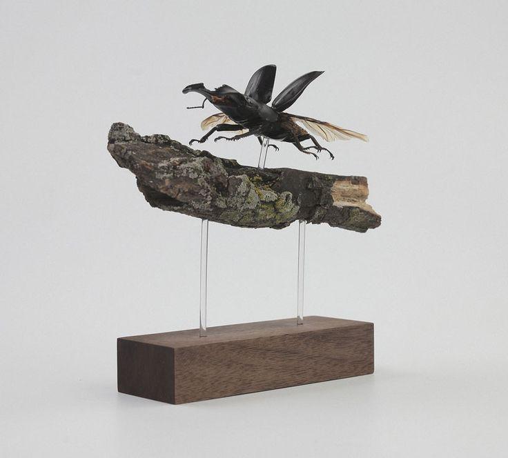 kebel li Beetles on a branch designboom
